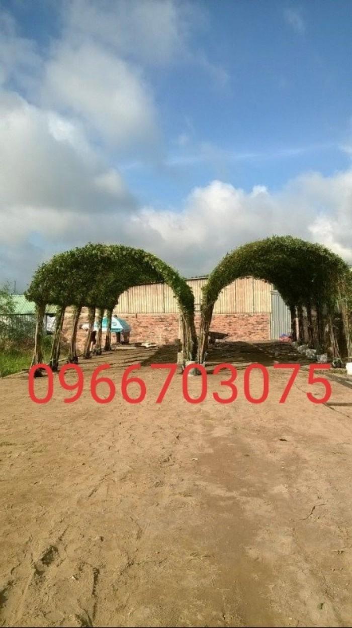 Chồi cây xanh ngôi nhà  xanh nhà vườn Đức Tiến Phát6