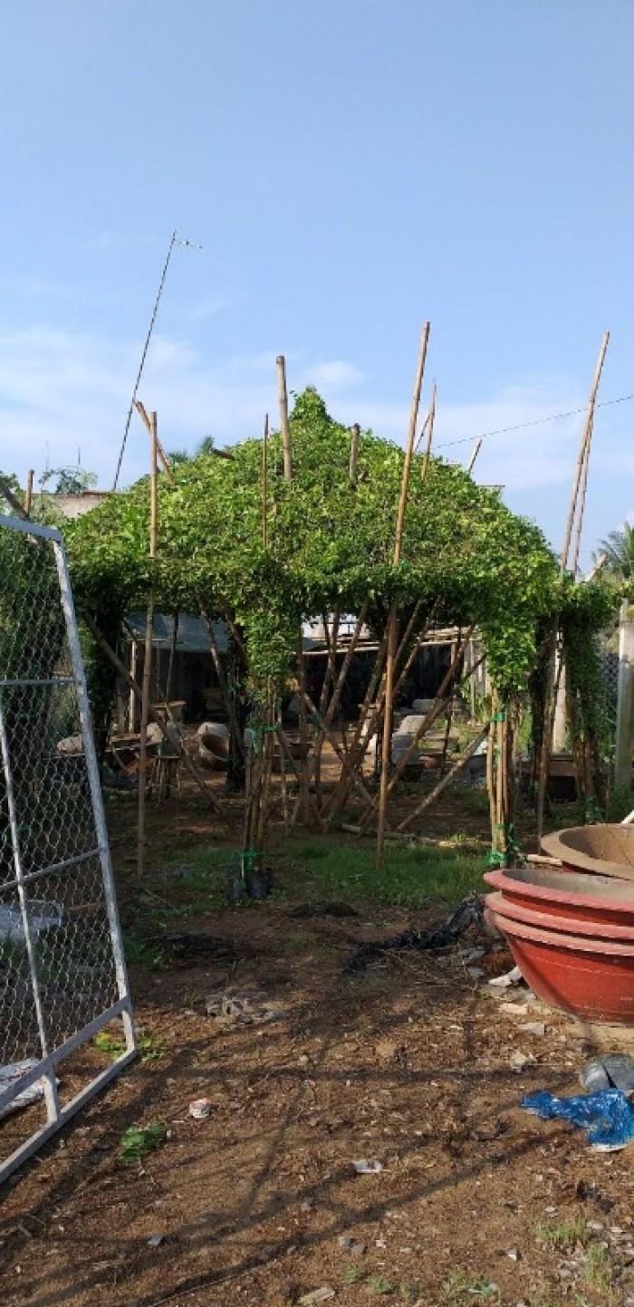 Chồi cây xanh ngôi nhà  xanh nhà vườn Đức Tiến Phát8