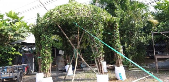 Chồi cây xanh ngôi nhà  xanh nhà vườn Đức Tiến Phát  Vườn cỏ nhung nhật - Nhà Vườn Đức Tiến Phát Mã số thuế: Địa chỉ: 124 Trịnh Quang Nghị p7, q8, TPHCM Web ChatNhanh: https://0966703075.chatnhanh.com Hotline: 09667030759
