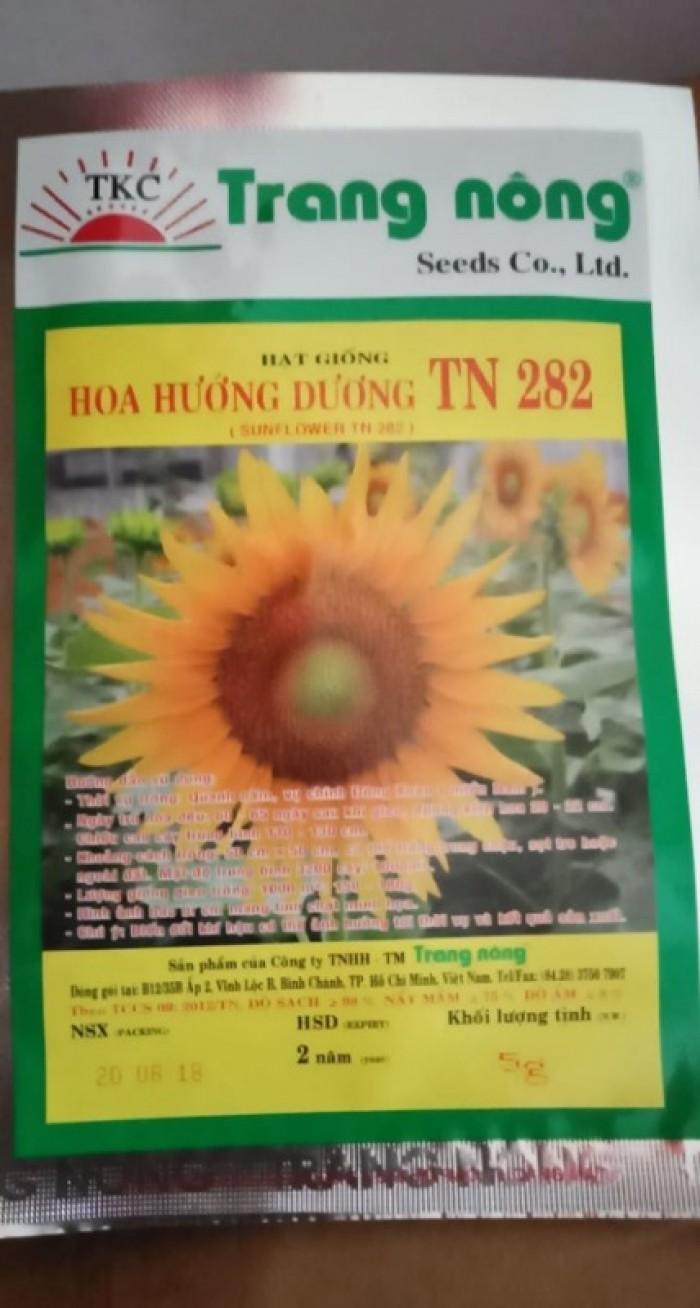 Hạt giống hoa hướng dương Trang Nông1