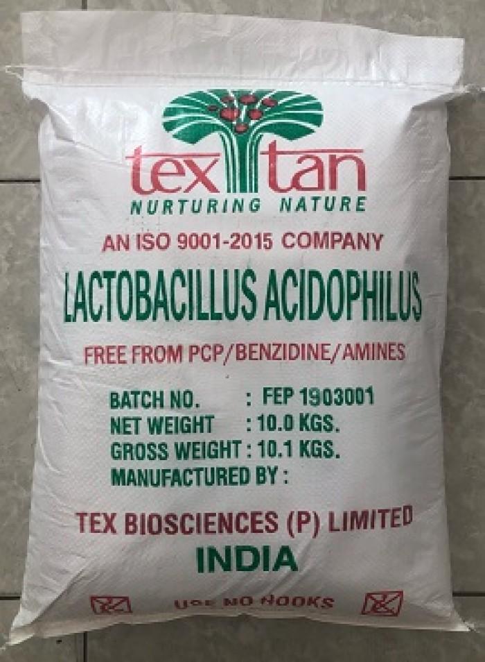 Men Đường Ruột đơn dòng Lactobacillus Acidophilus0