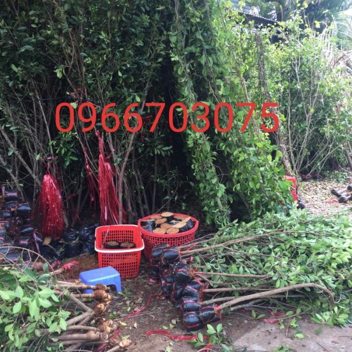 Hàng rào cây xanh tường cây xanh5