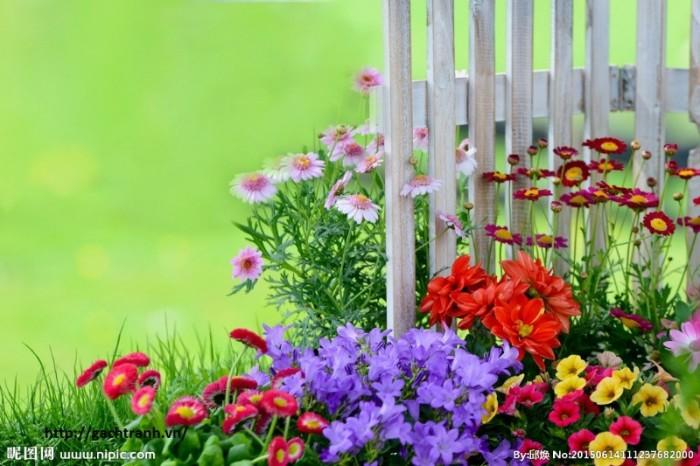 tranh 3d vườn hoa 3d - t343