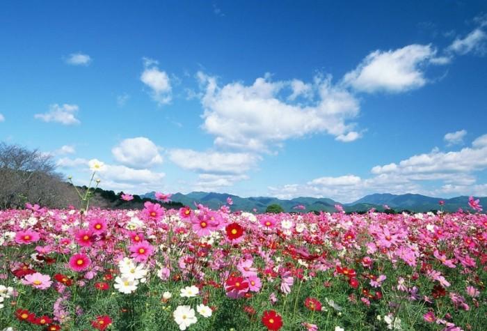 tranh 3d vườn hoa 3d - t342