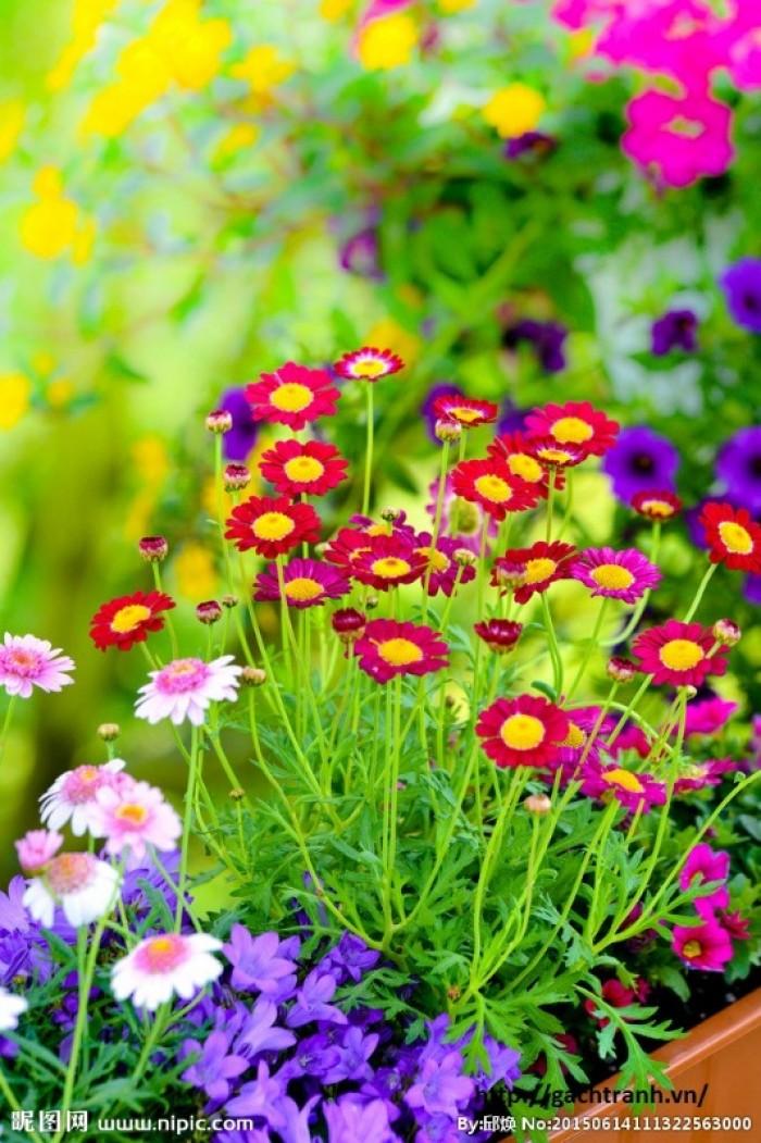 tranh 3d vườn hoa 3d - t346