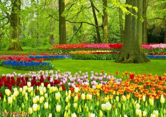 tranh 3d vườn hoa 3d - t344