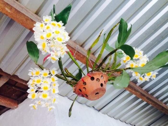 Phong lan rừng ,phong lan trai trâu bán nguyên vườn 200 giò lan rừng tự nhiên0
