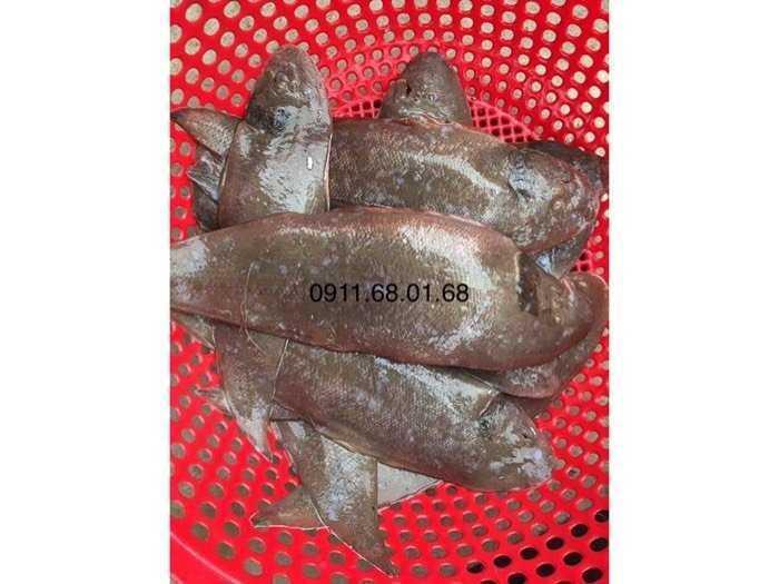 Hải sản sạch Ngư Lộc Thanh Hoá0