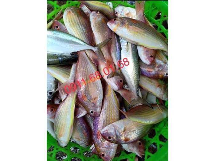 Hải sản sạch Ngư Lộc Thanh Hoá1