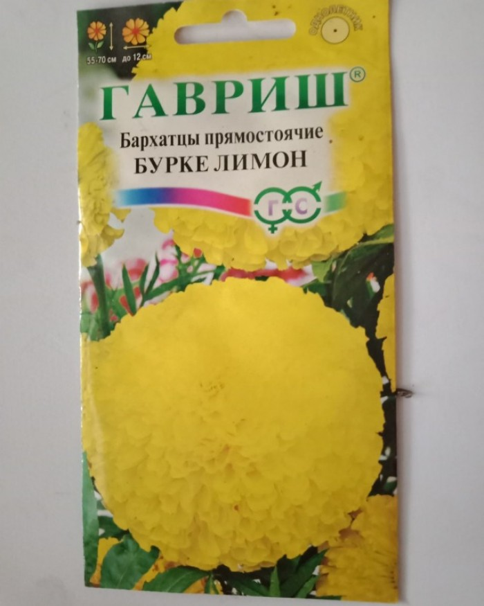 Hạt giống hoa vạn thọ bông to 12cm nhập khẩu Nga1
