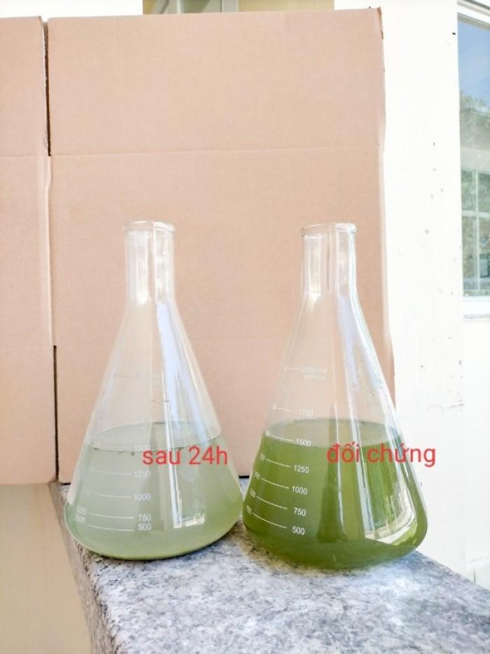 Men cắt tảo - làm sạch nước0