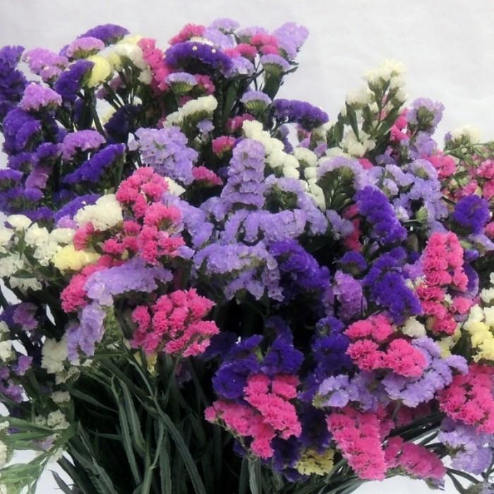 Hạt giống hoa Xalem mix nhiều màu Rạng Đông0