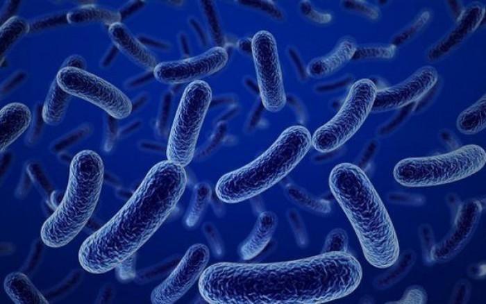 Cung cấp men Bacillus coagulans dạng nước0