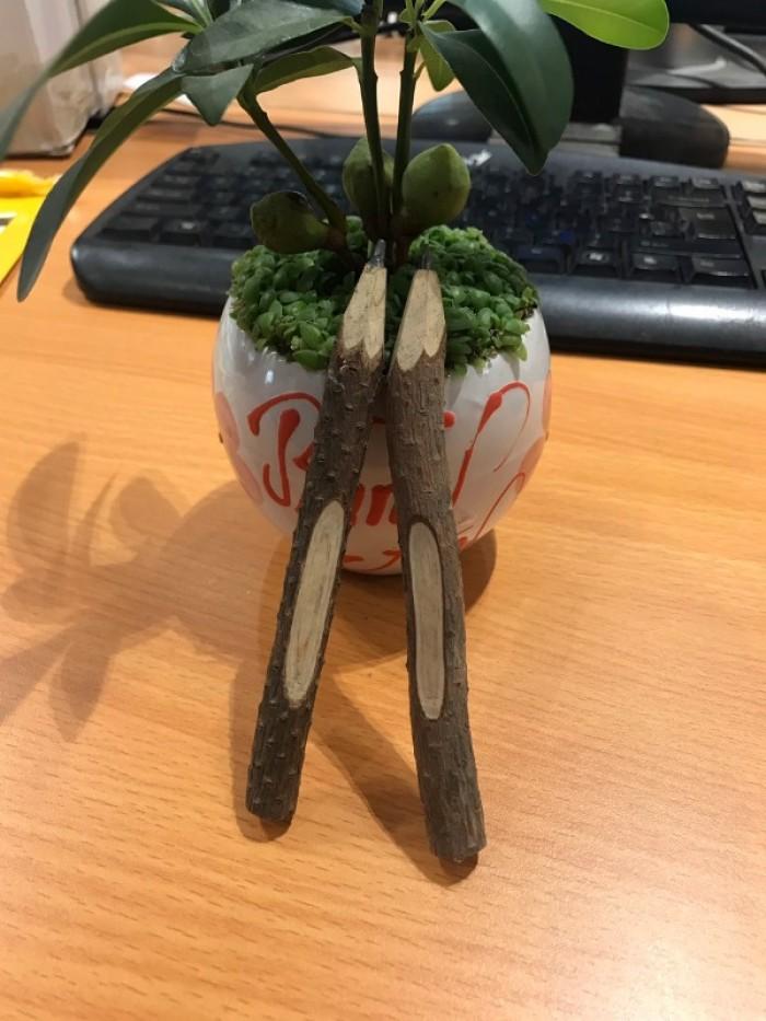 Bút chì gỗ cây tự nhiên thân thiện môi trường2