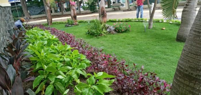 Trồng cỏ nhung Nhật sân vườn tiểu cảnh mini1