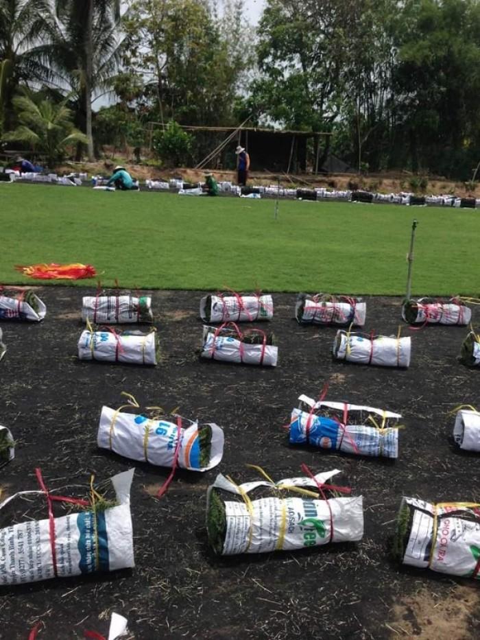 Trồng cỏ nhung Nhật sân vườn tiểu cảnh mini11
