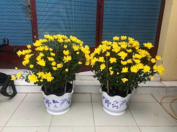 Chậu nhựa treo - Chậu trồng hoa Thakico0
