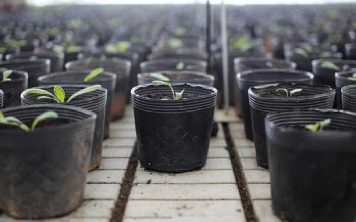 Chậu nhựa trồng cây - Chậu hoa nhựa Thakico0