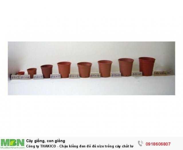 Công ty THAKICO - Chậu kiểng đen đỏ đủ size trồng cây chất lượng, giá rẻ3