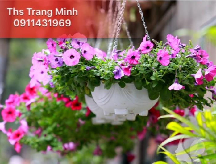 Chuyên cung cấp cây giống hoa Dạ Yến Thảo1