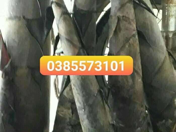Măng tre tươi nguyên cây  măng mạnh tông2