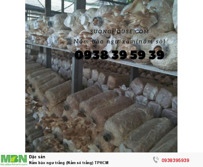 Nấm bào ngư trắng (Nấm sò trắng) TPHCM0