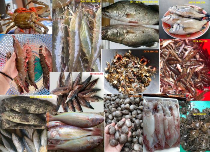 Hải sản, thủy sản Kim Sơn, Ninh Bình0