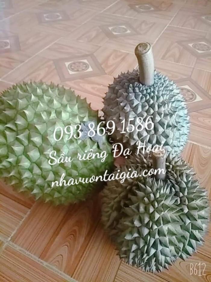 Sầu riêng Đa Hoai Lâm Đồng cơm sầu riêng Ri 65