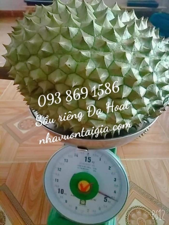 Sầu riêng Đa Hoai Lâm Đồng cơm sầu riêng Ri 68