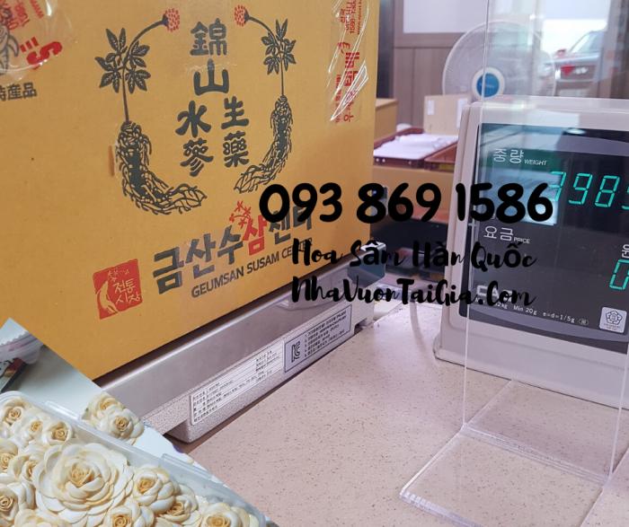 Hoa Sâm Hàn Quốc  mua tại TPHCM gọi 093 869 158613