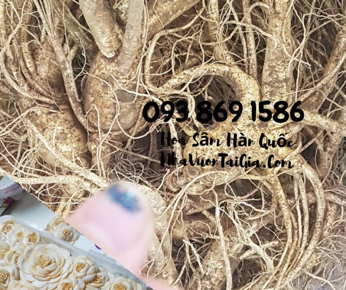 Hoa Sâm Hàn Quốc  mua tại TPHCM gọi 093 869 158614