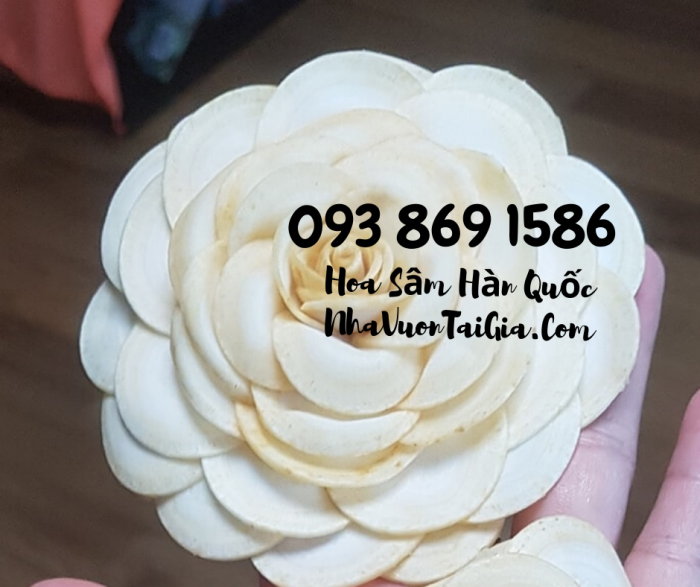 Hoa Sâm Hàn Quốc sỉ TPHCM  - Gọi 093 869 1586 11