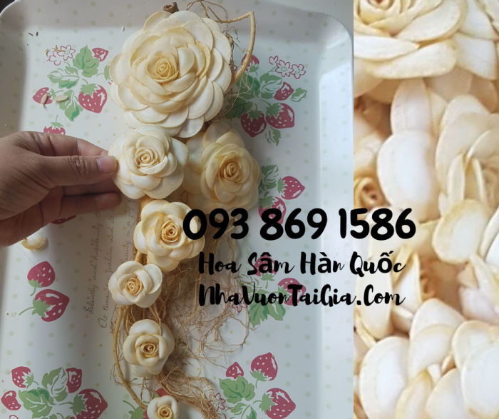 • Mua sâm tươi Hàn Quốc TPHCM -giá Nhân sâm Hàn Quốc  - gọi  093 869 158618