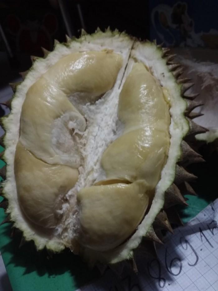 Sầu riêng rụng sầu riêng hạt truyền thống Vườn Nhà Đậu Dậu Lâm Đồng -093 86915866