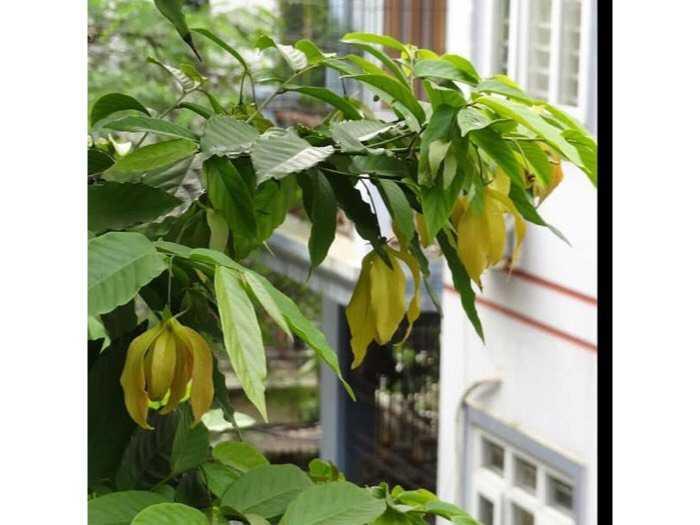 Cũng cấp cây giống cây hoa dẻ3