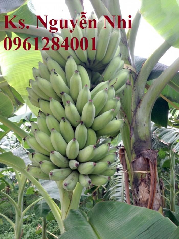 Chuyên cung cấp cây giống chuối tây thái, chuối mốc, chuối sứ, giao cây toàn quốc. LH 0961284001