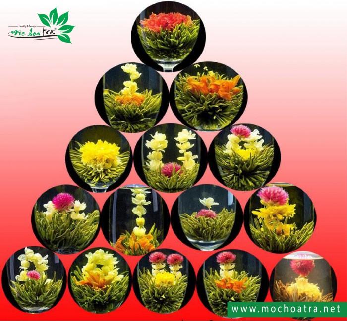 Trà hoa nghệ thuật/Blooming Tea - Mộc Hoa Trà11