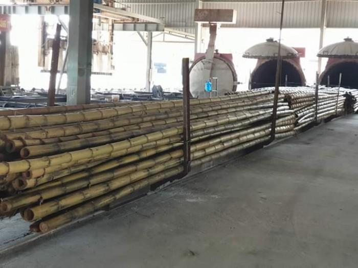 Vựa tre Sài Gòn, bán cây tre, bán cây trúc, bán cây luồng2
