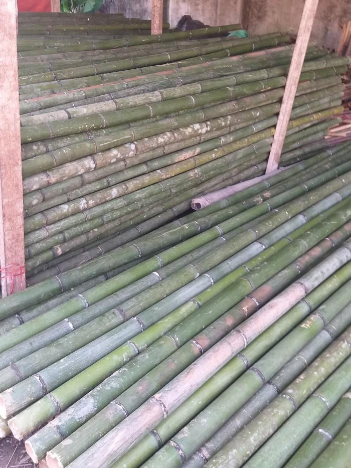 Vựa tre Sài Gòn, bán cây tre, bán cây trúc, bán cây luồng4