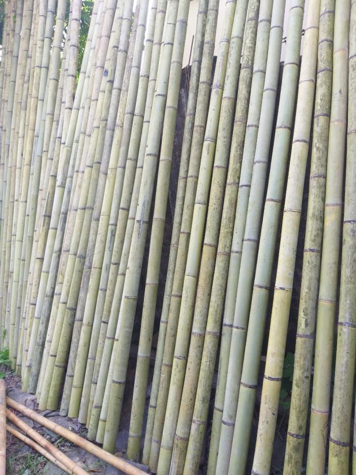 Vựa tre Sài Gòn, bán cây tre, bán cây trúc, bán cây luồng5