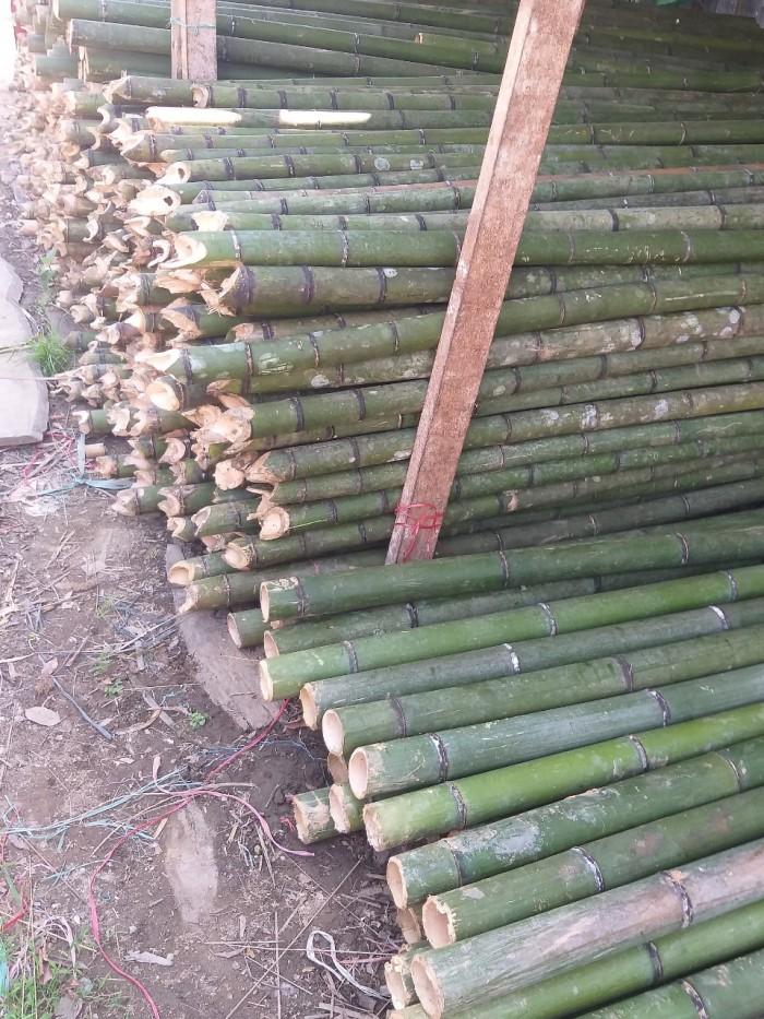 Vựa tre Sài Gòn, bán cây tre, bán cây trúc, bán cây luồng10