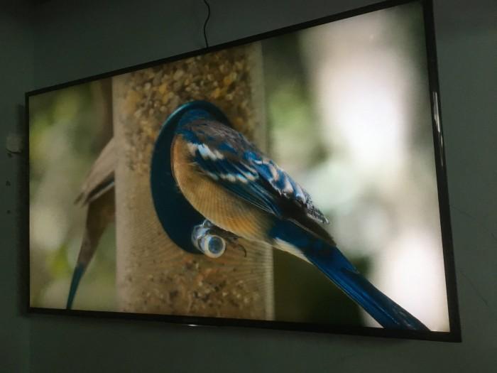 Smart Tivi Sony 48 inch nhà dùng kẹt bán1