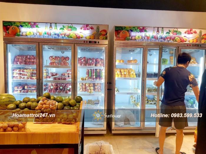 Tủ mát bảo quản hoa quả, trái cây nhập khẩu5