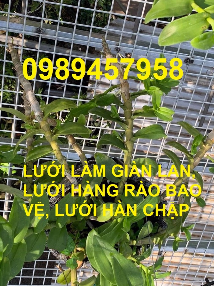Lưới thép làm giàn phong lan, lưới thép bảo vệ vườn, lưới làm chuồng cọp0