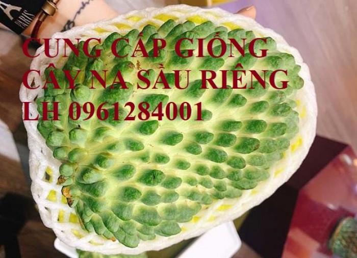 Cây giống na sầu riêng, na dứa Đài Loan, mãng cầu vị sầu riêng, chất lượng0