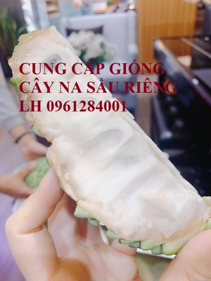 Cây giống na sầu riêng, na dứa Đài Loan, mãng cầu vị sầu riêng, chất lượng3