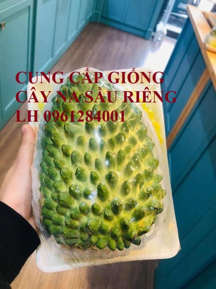 Cây giống na sầu riêng, na dứa Đài Loan, mãng cầu vị sầu riêng, chất lượng2