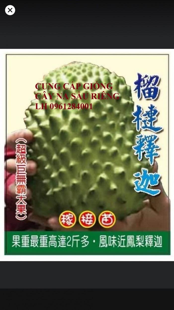 Cây giống na sầu riêng, na dứa Đài Loan, mãng cầu vị sầu riêng, chất lượng7