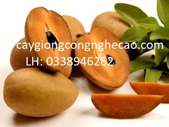 Cung cấp cây giống: Hồng Xiêm Xoài0