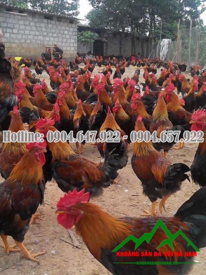 Bổ sung Canxi cho gia súc, gia cầm bằng Đá vôi CaCO39